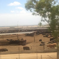 Photo taken at Harris Ranch Cattle Yards by Shanty R. on 5/26/2017