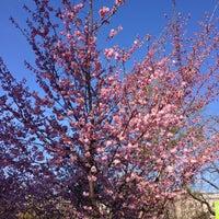 Das Foto wurde bei Stadtpark von Isabella M. am 4/14/2013 aufgenommen