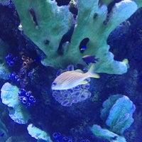 4/6/2013 tarihinde Green D.ziyaretçi tarafından Antalya Aquarium'de çekilen fotoğraf