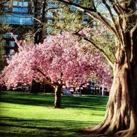Photo prise au Boston Public Garden par Alice P. le5/3/2013