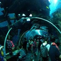 Photo taken at S.E.A. Aquarium by Lien P. on 4/14/2013