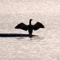Photo taken at Fleet Pond by Barry P. on 11/4/2012