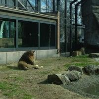 Photo taken at George H. Carroll Lion Habitat by Jeremy B. on 2/16/2013