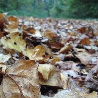 Photo taken at Heerener Wald by Merve R. on 10/29/2012