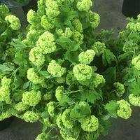 Photo taken at Berkeley Florist Supply by Angela G. on 10/4/2014