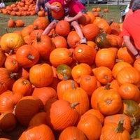 Photo taken at Pumpkin patch by Diane N. on 10/20/2012