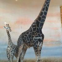 Photo taken at Prague Zoo by Anastasia <UTYA> S. on 11/24/2012