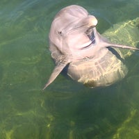 Photo taken at Island Dolphin Care by William B. on 8/1/2014