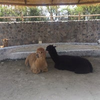 Photo taken at Zoológico de camélidos sudamericanos by Daniella A. on 12/24/2016