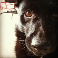 Photo taken at Bark ATL by Joanna P. on 10/30/2012