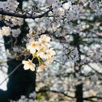 Photo taken at 法明寺 墓地 by Yoshitaka p. on 3/25/2018