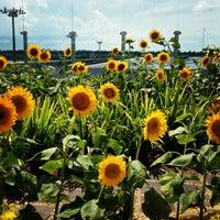 Das Foto wurde bei Sunflower Garden von Billy Joel am 4/2/2013 aufgenommen