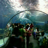 Photo taken at Manila Ocean Park by Romeo N. on 11/28/2012