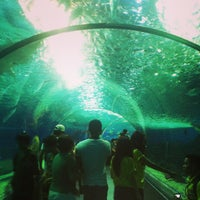 Photo taken at Manila Ocean Park by Павел Б. on 2/27/2013