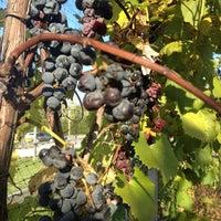 Photo taken at Vinoklet Winery & Vineyard by Alyssa S. on 10/12/2012