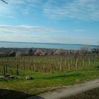 Photo taken at Csopak by Tekla H. on 4/14/2013