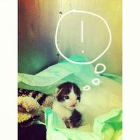 5/20/2013にErica A.がPró Vida Animalで撮った写真