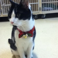 Photo taken at The Cat Clinic Of Greensboro by Alisa N. on 1/22/2013