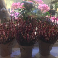 Photo taken at Espresso Holic in 29 Flowers by Anastasiia B. on 11/7/2017