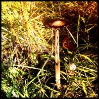 Снимок сделан в Sherwood Forest National Nature Reserve пользователем Trish M. 10/15/2012