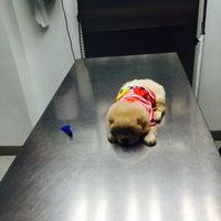 """6/10/2015 tarihinde """"NEFES E.ziyaretçi tarafından Pet Hospital'de çekilen fotoğraf"""