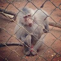 Photo taken at Bloemfontein Zoo by Stefan S. on 4/21/2013