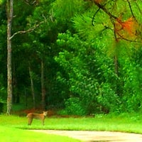 Photo taken at Picayune Strand State Forest by Kevin J. on 8/18/2013