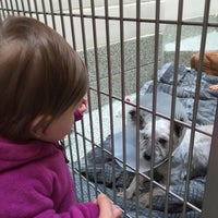 Photo taken at MSPCA Adoption Center by Andrew T. on 1/11/2015