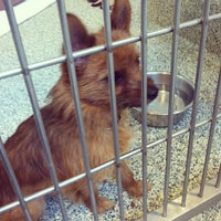 Photo taken at MSPCA Adoption Center by Andrew T. on 1/5/2013
