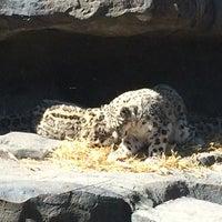 3/18/2014 tarihinde Jennifer M.ziyaretçi tarafından Central Park Zoo - Snow Leopard'de çekilen fotoğraf