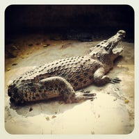 Photo taken at The Million Years Stone Park & Pattaya Crocodile Farm by Vovan M. on 2/9/2013