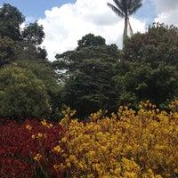 Jardín Botánico José Celestino Mutis - Engativá - 88 tips from 2585 ...