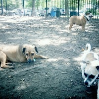 Photo taken at McCarren Dog Park by Ned R. on 7/3/2012