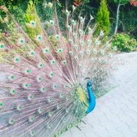 6/13/2017 tarihinde MusTafa K.ziyaretçi tarafından Göcek Naz Hotel'de çekilen fotoğraf
