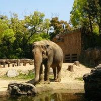 Photo taken at Tennoji Zoo by Saori T. on 4/28/2013