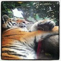 Das Foto wurde bei Kölner Zoo von bincster am 10/14/2012 aufgenommen
