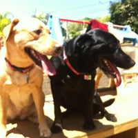 Photo taken at Dog's Hotel Center by Yoe M S. on 8/15/2013
