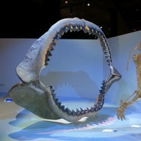 Foto tirada no(a) Houston Museum of Natural Science por Yamin M. em 12/18/2012