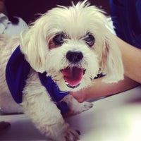Photo taken at Thonglor Pet Hospital by Titang P. on 1/10/2013