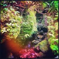 Photo taken at Devil's Millhopper Geological State Park by Matt F. on 5/9/2013