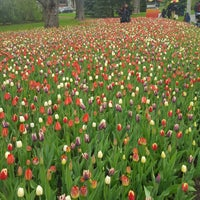 Photo taken at Tulip Festival Headquarters by Safae S. on 5/13/2017