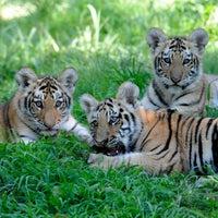 Photo prise au Bronx Zoo par Samman le4/23/2013