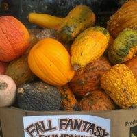 Photo taken at Trader Joe's by Lisa P. on 10/26/2012