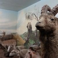 Photo taken at Latvijas dabas muzejs   Latvian Museum Of Natural History by Marija P. on 5/20/2017