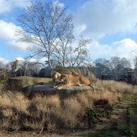 Foto tirada no(a) Parc zoologique de Paris por Bruce D. em 1/17/2015