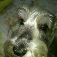 Photo taken at Pet Shop Dog Space by Agatha K. on 10/25/2012