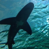 Photo taken at Ripley's Aquarium by Allan C. on 9/16/2012
