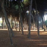 Photo taken at Pineta di Pinarella by Luca C. on 10/23/2012