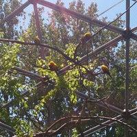 5/27/2013にDondi H.がQueens Zoo Aviaryで撮った写真