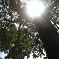 Photo taken at The Big Shade Tree by Amy S. on 8/25/2013